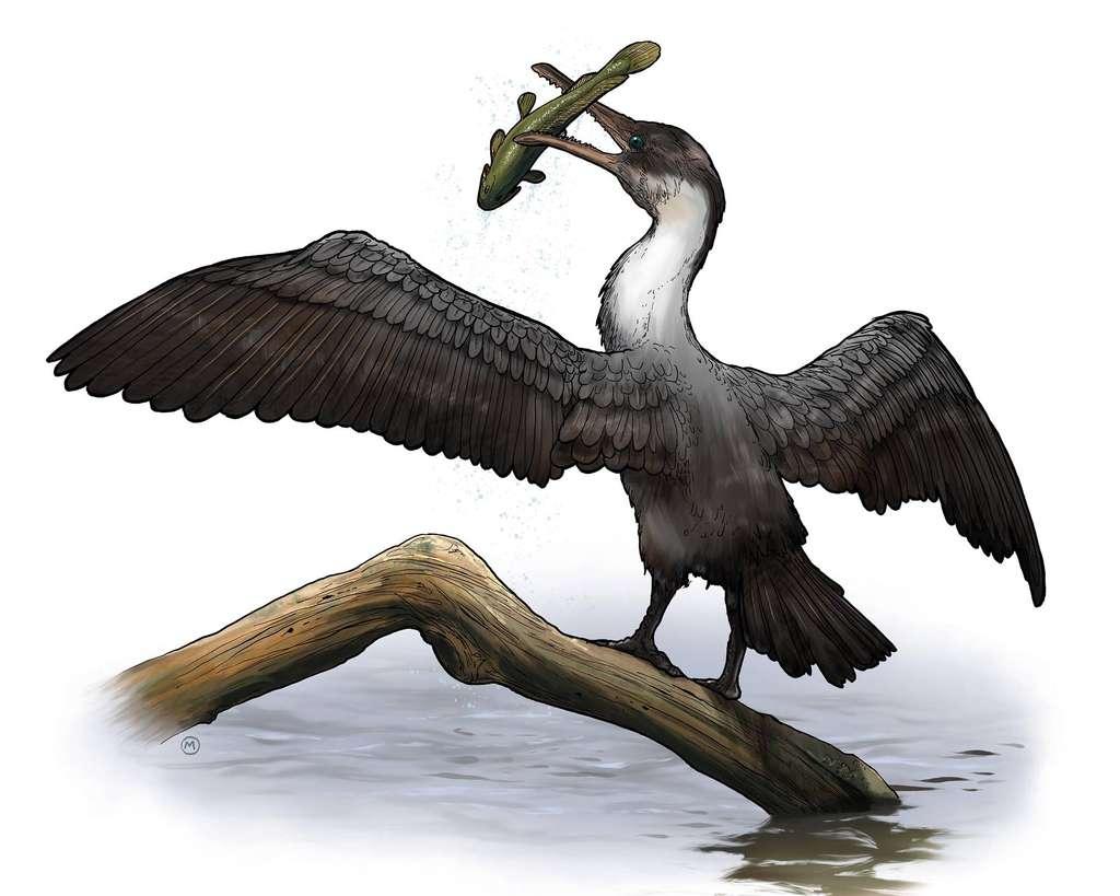 Une représentation possible de Tingmiatornis arctica, un oiseau du Crétacé supérieur qui vivait en Arctique à l'époque où il y faisait chaud. © University of Rochester, Michael Osadciw