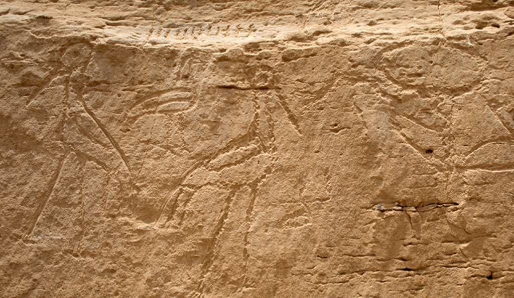 Gros plan sur les hiéroglyphes géants de Nekheb. © Yale University
