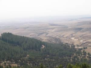 La pinède semi-aride de Yatir, à la frontière du désert, absorbe plus de carbone que la plupart des forêts tempérées. © Okedem by-sa