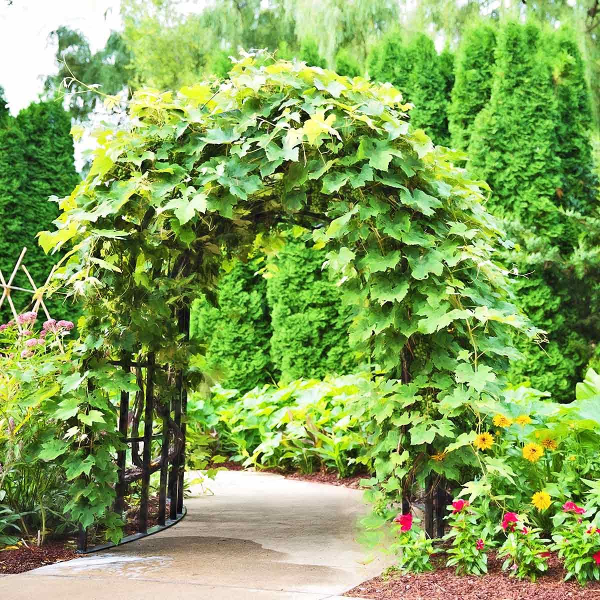pergola tonnelle et arche de jardin