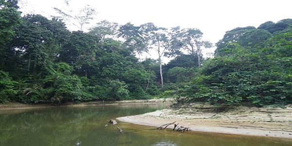 Photo de la foret congolaise