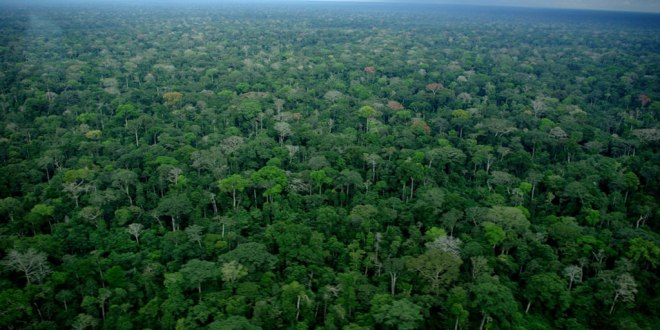 Foret congolaise