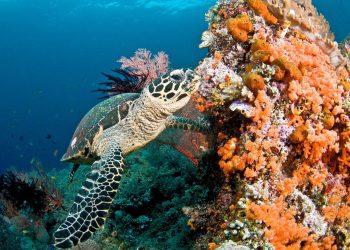 Les récifs coralliens pourraient disparaître d'ici la fin du siècle, prévient l'ONU