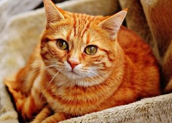 Vidéo. Un expatrié français poursuivi pour actes de cruauté envers des chats