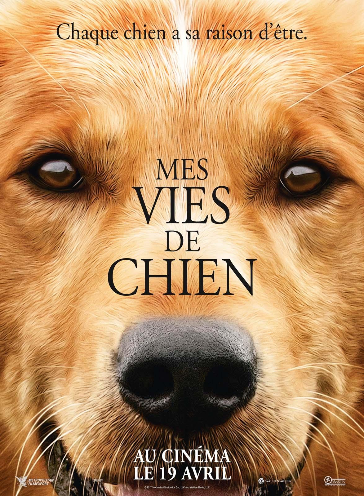 Mes vies de chien - film 2017 - AlloCiné
