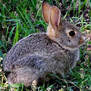 rabbit 300 - Index A-Z