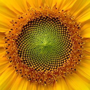 sunflower 300 - Index A-Z