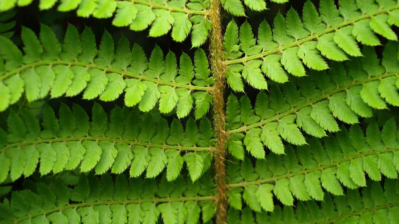 Fern - Close up