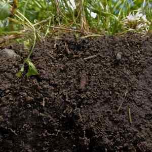soil - Index A-Z