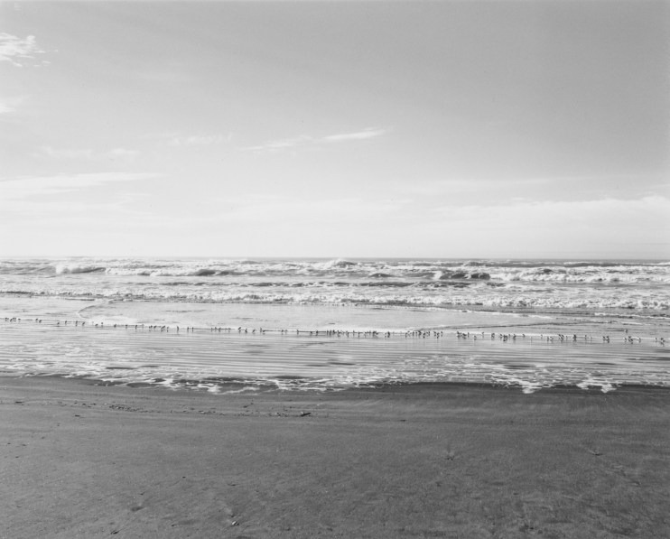 Black-and-white horizontal photograph of birds on a beach
