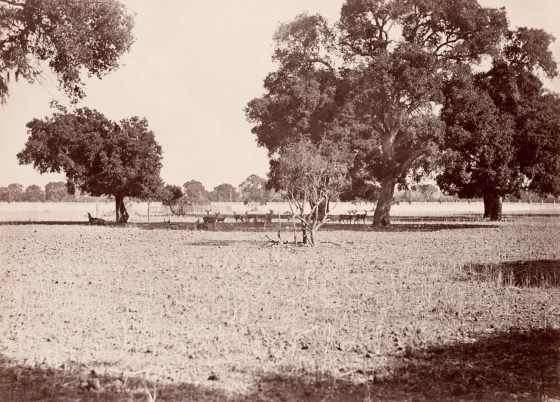 The Deer Park, Menlo Park, California, ca. 1874, mammoth-plate albumen print