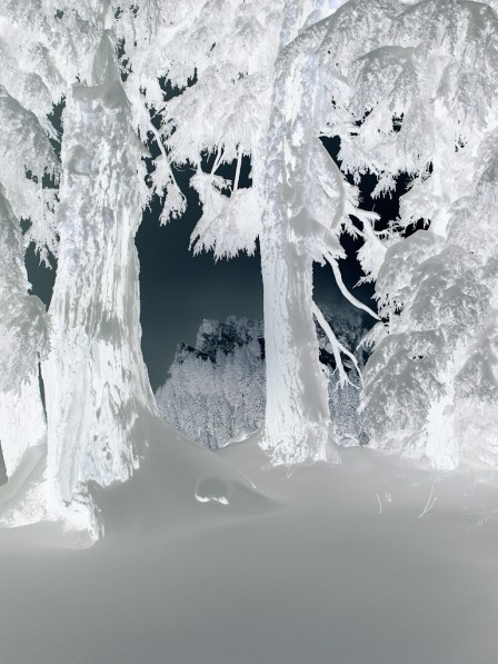 Inverted black and white photograph of pine trees in a snowdrift