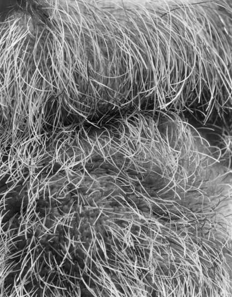 Black-and-white close-up photograph of beard hairs around a mouth
