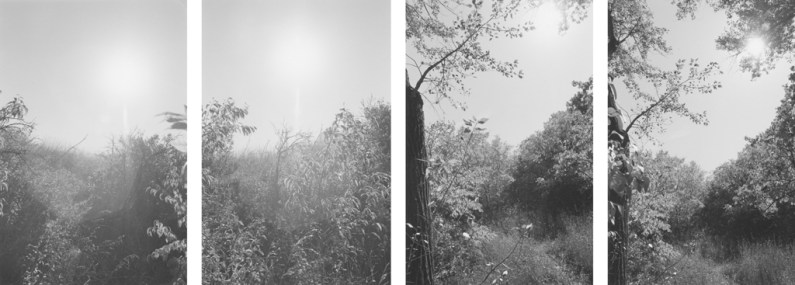 Four black-and-white photographs with leafy tree branches and a brightly lit sky.