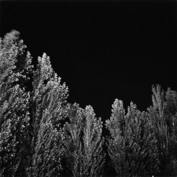 Black-and-white photograph of tree tops against a night sky