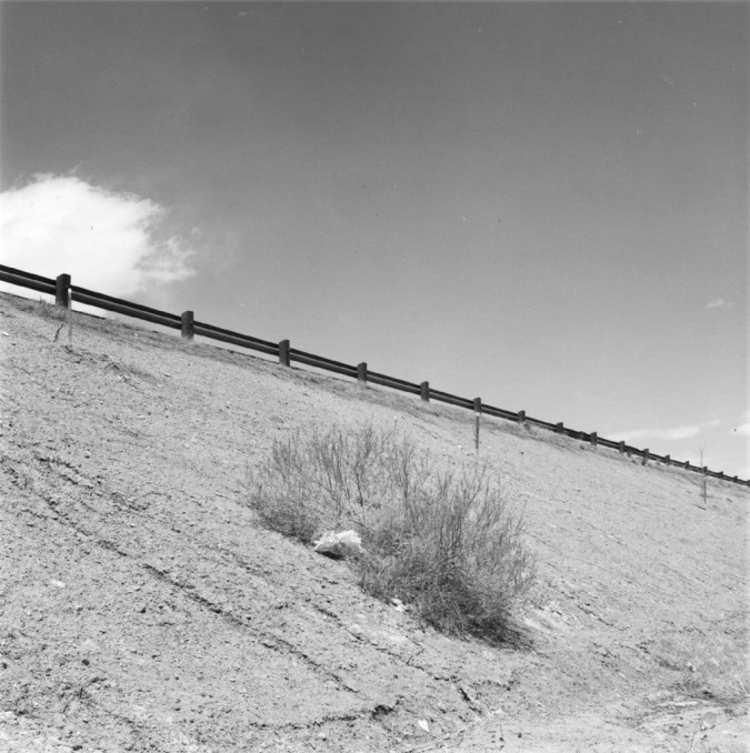 A black and white photograph of a bush and a guardrail on a freeway embankment.
