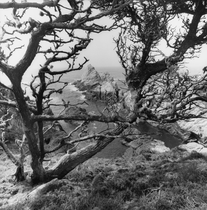 Black-and-white photograph of bare trees and a rocky shore in the background