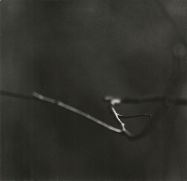 Black-and-white photograph of a thin zig-zagging bare branch