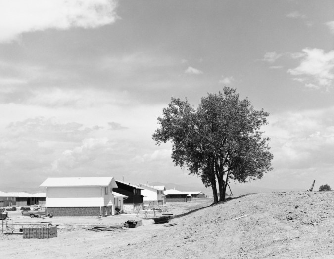 A black and white photograph of a lone tree and suburban houses against a cloudy sky.