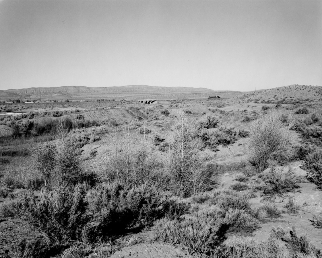 A black and white photograph with plants in the foreground and highway with vehicles in the distance.