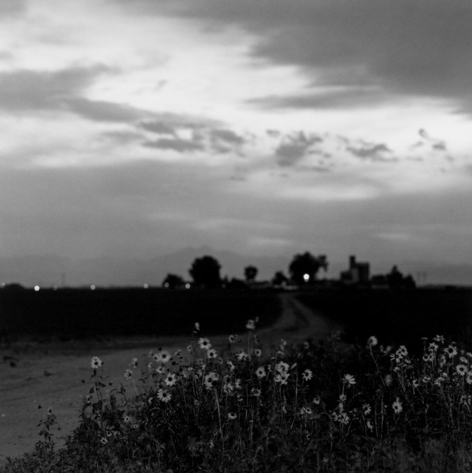 Black-and-white photograph of sunflowers in front of a dirt road