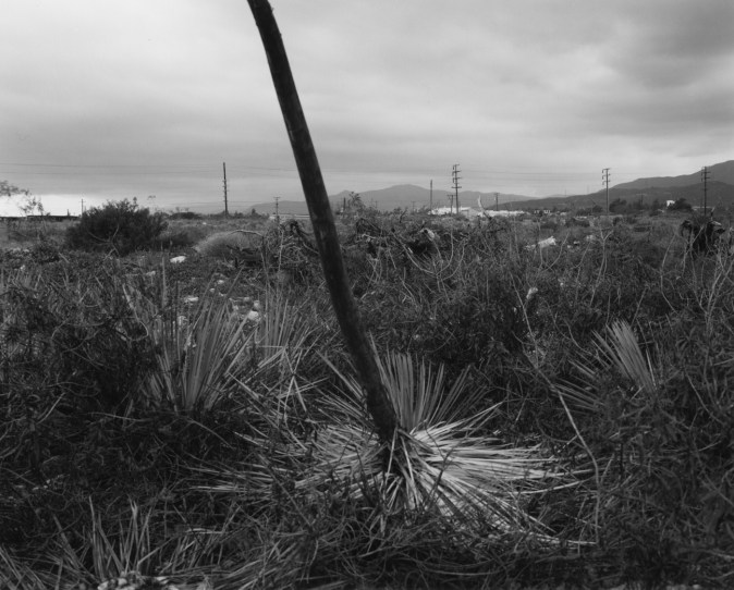 Black-and-white photograph of a large plant in the center of the frame against a cloudy sky