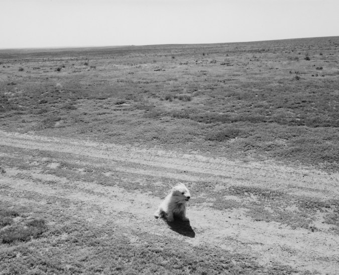 A black and white photograph of a small white dog sitting in the middle of a dirt road.