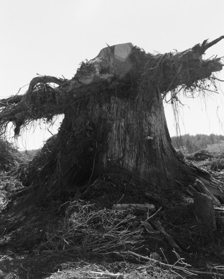 A second growth stump on top of a first growth stump, Coos County, Oregon, 1999, gelatin-silver print
