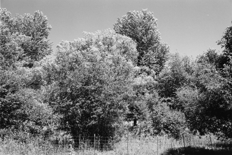 Black-and-white photograph with trees and a wire fence