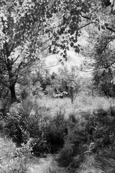 Black-and-white vertical photograph of trees