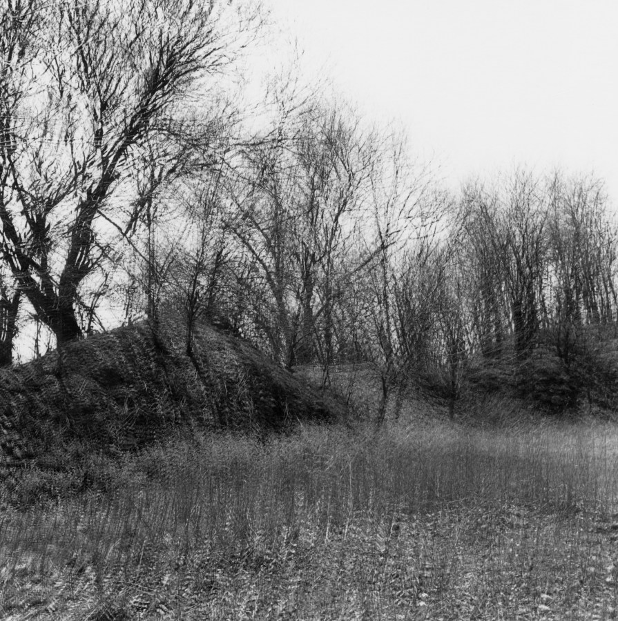 Black-and-white multiple-exposure photograph of bare trees on a hill above a leaf-littered ground