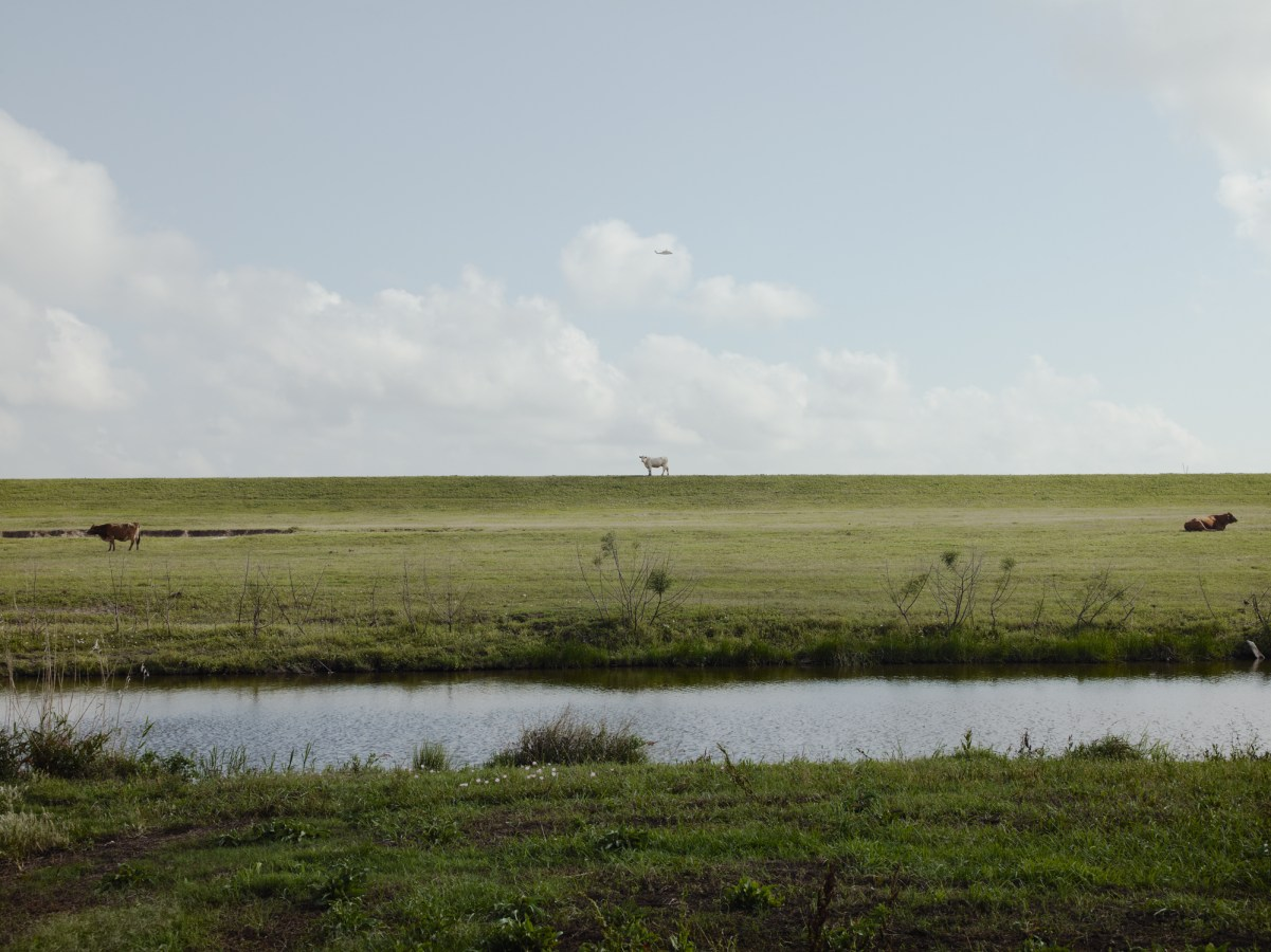 Color photograph of a water-filled ditch before a wide grassy meadow with a single cow on the horizon