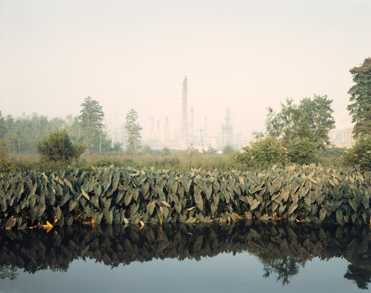 Color photograph of a large leafy plant running along a water-filled ditch in front of a haze-covered power plant