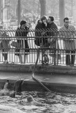 Black and white photograph of a couple watching sea lions swim in the water below behind a metal fence