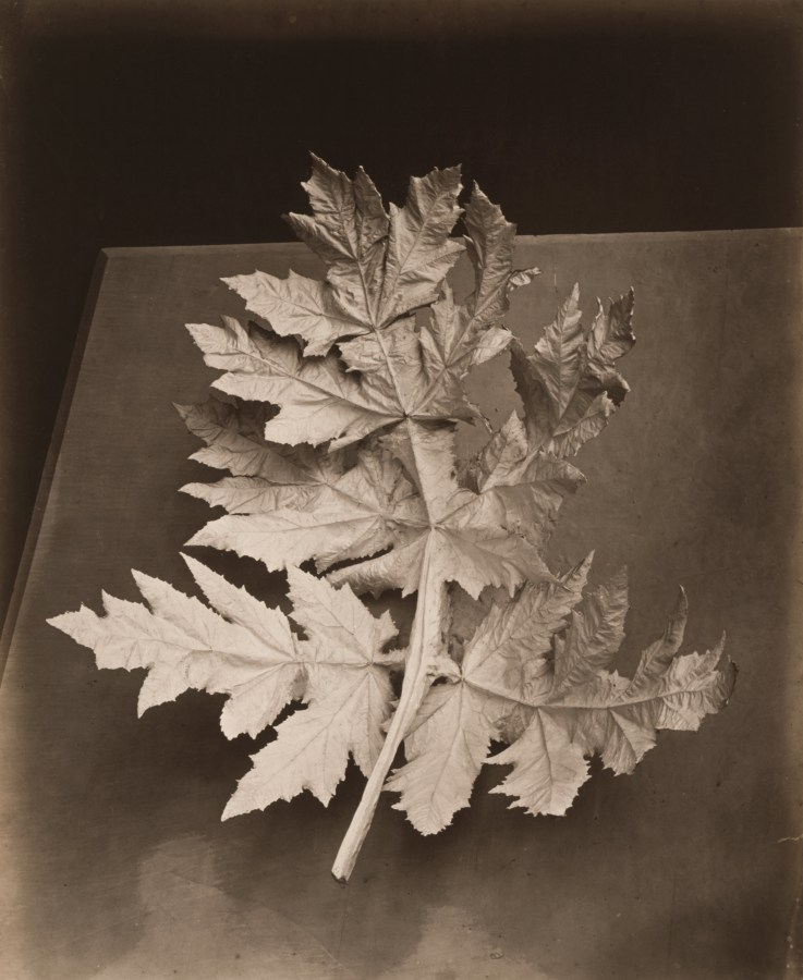 Black and white photograph of a dry leaf on a table