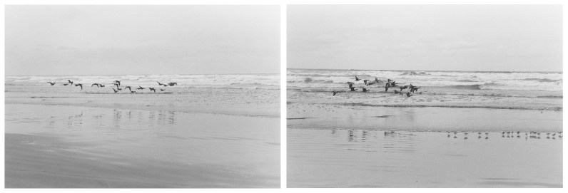 Two black-and-white horizontal photographs of birds on a beach
