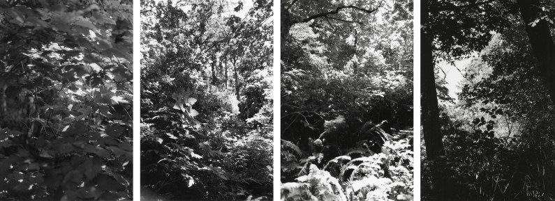 Four black-and-white vertical photographs showing details of leaves and tree trunks in a dense forest