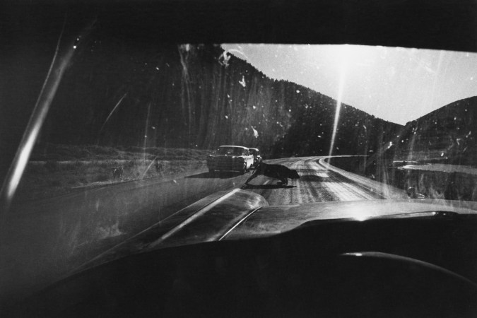 Black-and-white photograph taken through a car's front windshield of a calf crossing the road