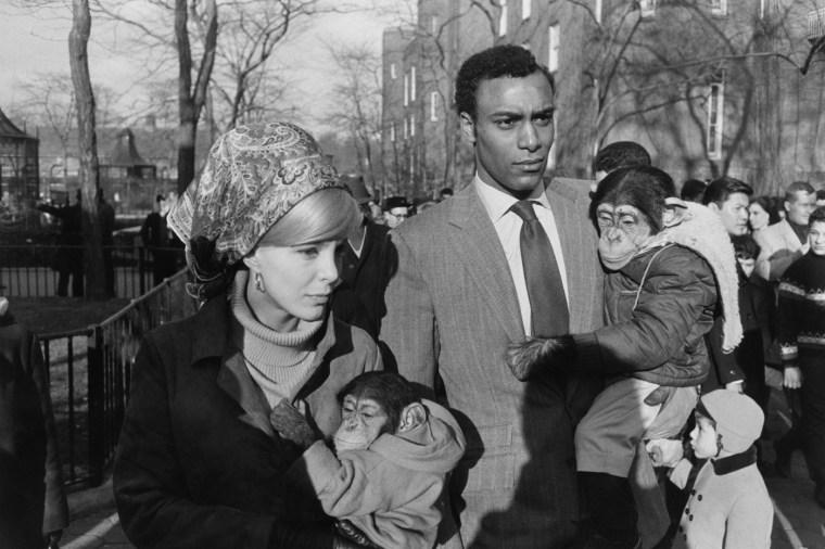 Central Park Zoo, New York, 1967, gelatin-silver print
