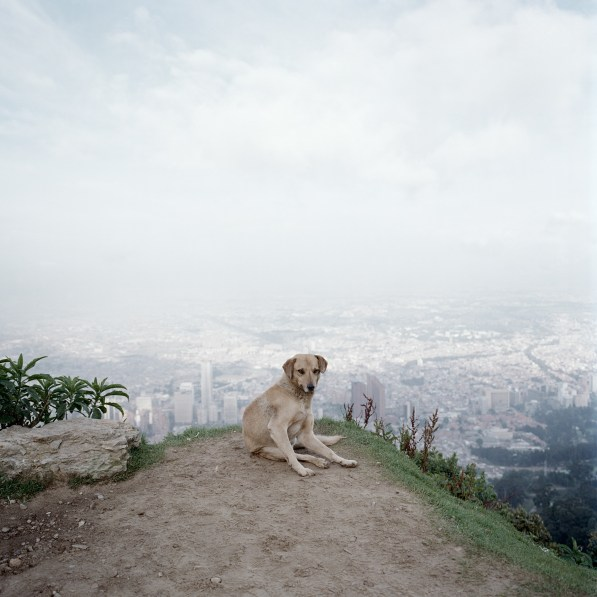 Color photograph of a yellow lab sitting on a hilltop overlooking a city