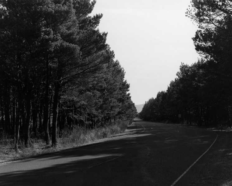 black-and-white horizontal photo of a road running through a forrest with tall trees and a bright sky