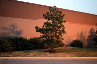 Color photograph of a pine tree behind a large building at sunset