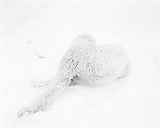 J.W. Fisher, Dog In Snow, 2010/2014