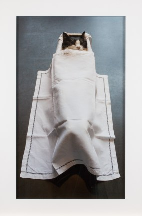 A framed photograph of a cat in a coffin, covered by a white blanket