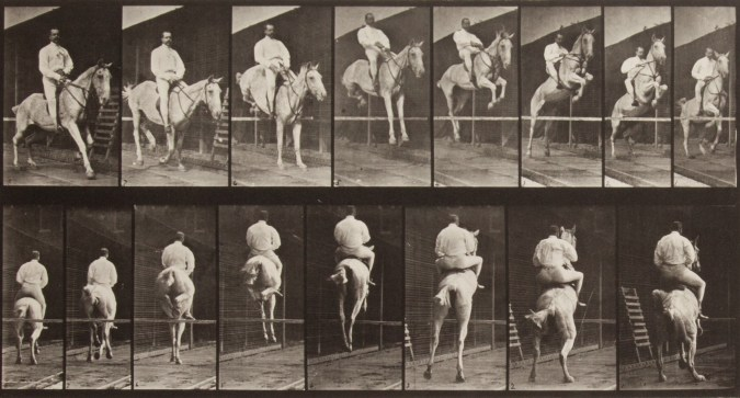 Two horizontal rows of vertical black-and-white photographs of a horse and rider going over a jump, from the front in the top row and from the rear in the bottom row