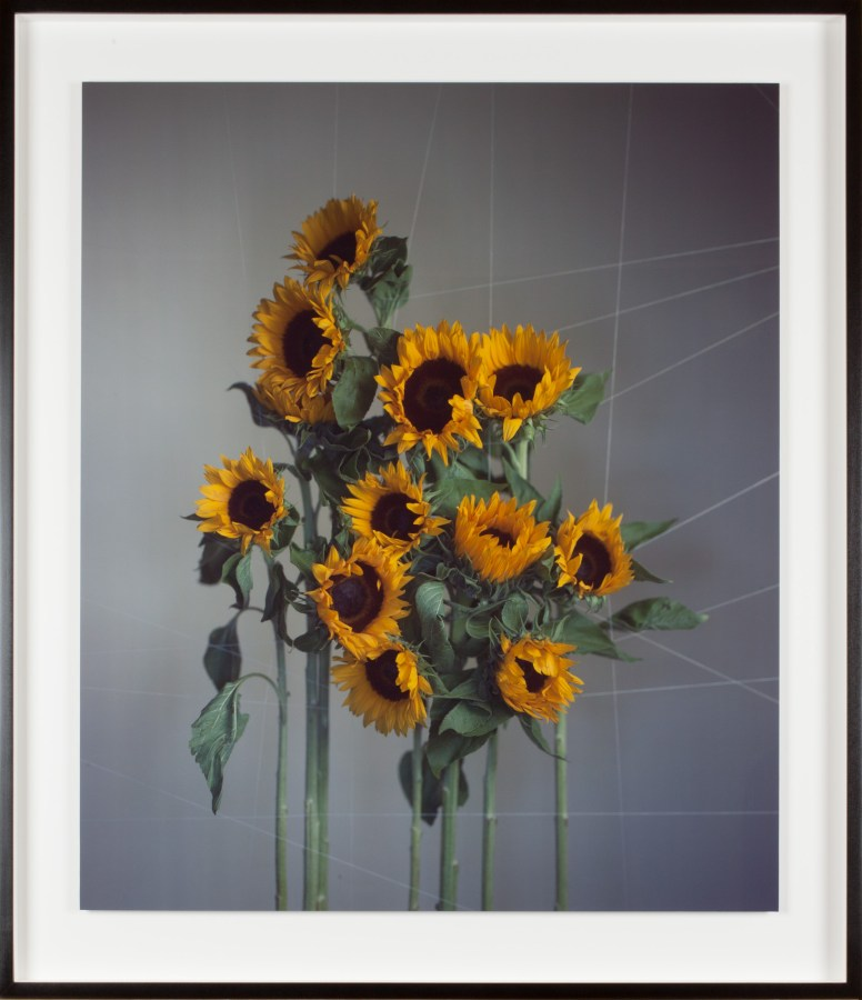 Color photograph of standing yellow flowers with green stems on a gray background with criss-crossing lines