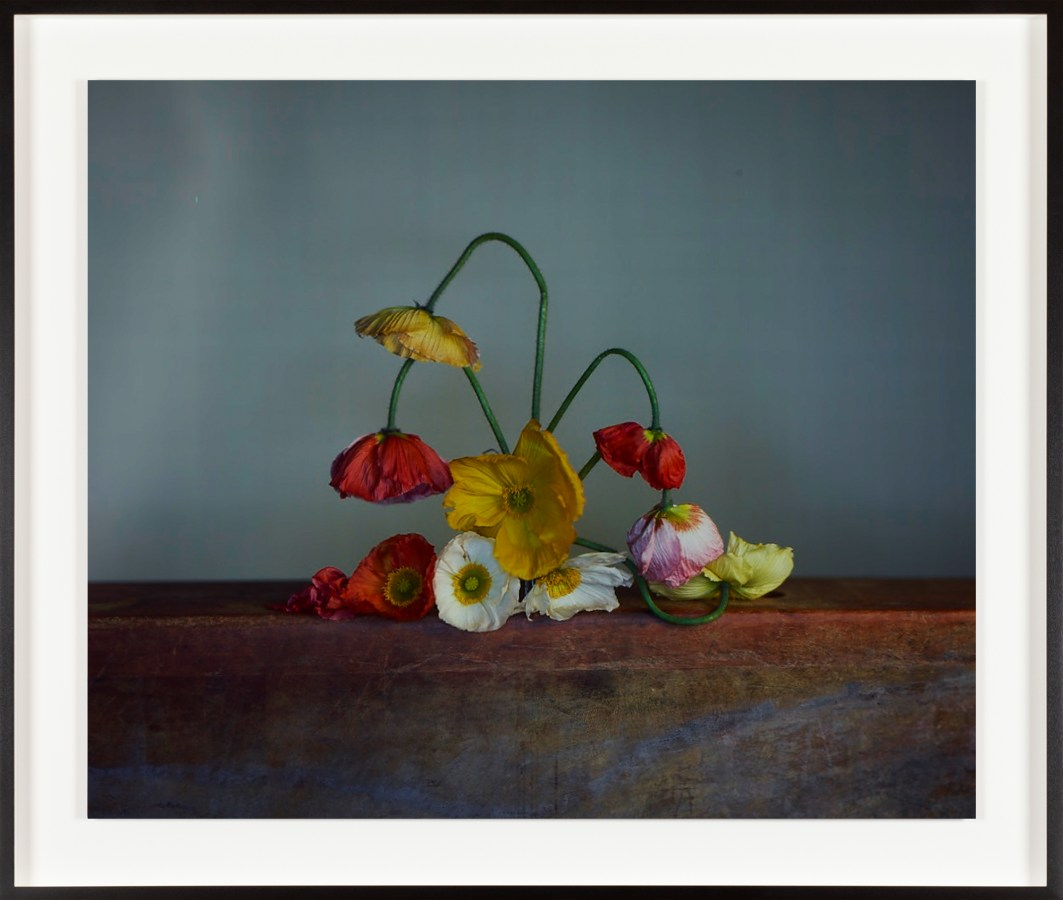 Framed, color photograph of a bouquet of colorful poppy flowers