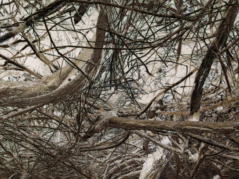 Inverted color photograph of tangled thick branches and twigs