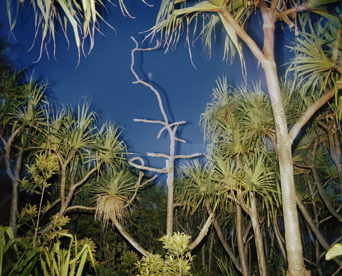 Color photograph of tropical vegetation at night.