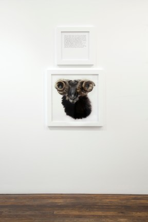 A square framed text panel hanging over a square framed photograph of a ram